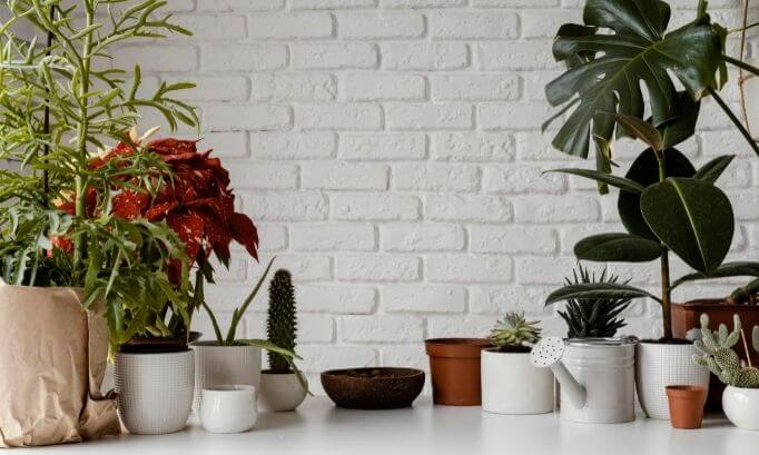 Plants to Have at Home